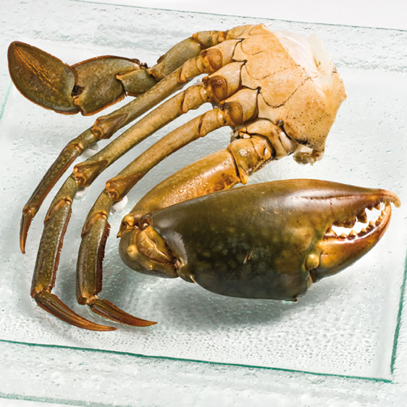 Frozen mangrove crab from Madagascar - Freshpack