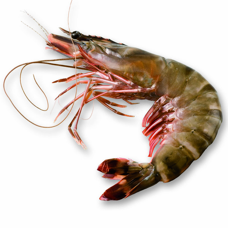 Frozen VIETNAMESE BLACK TIGER HEAD ON PRAWNS_La Jonk-Freshpack