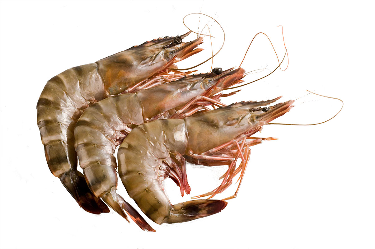 Frozen HEAD ON WILD PINK PRAWNS-Freshpack