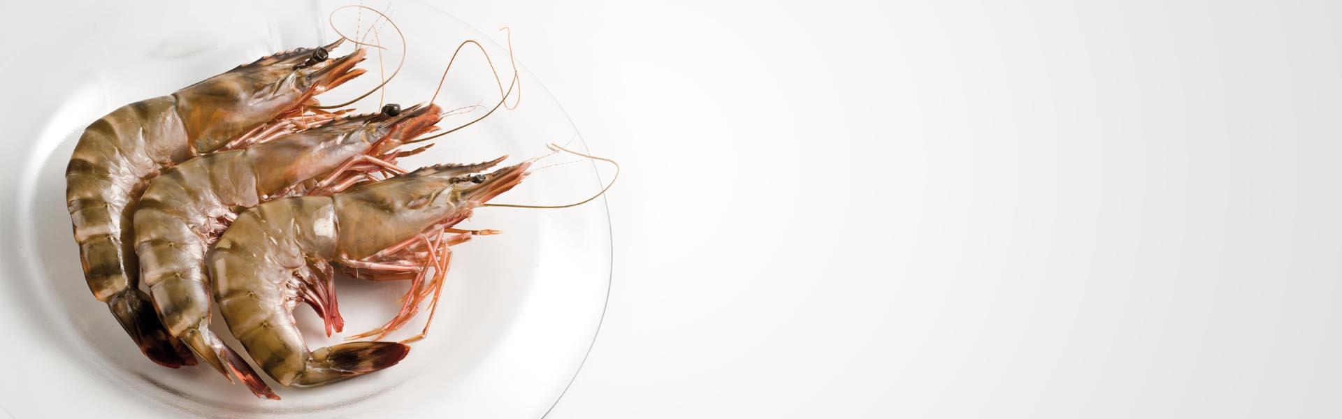 FRESHPACK_slider crevettes madagascar