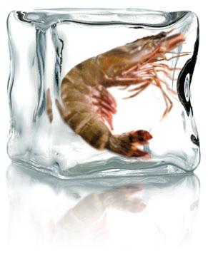 Glacon Producteurs produits de la mer surgelés-Freshpack