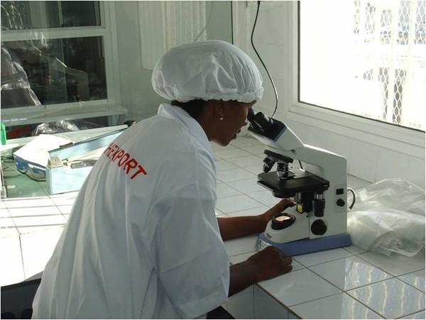 Producteurs Produits de la mer surgelés-Freshpack2