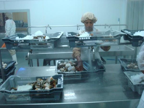 Producteurs Produits de la mer surgelés-Freshpack