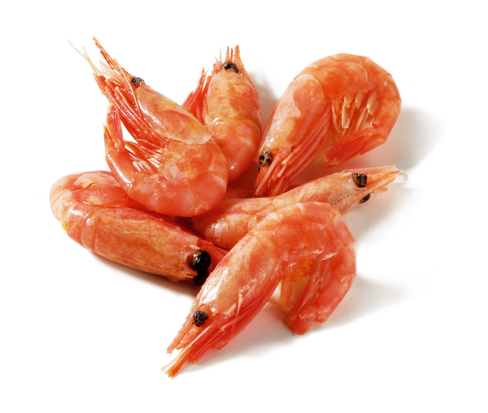 Importer Frozen cooked coldwater prawns shrimps head on