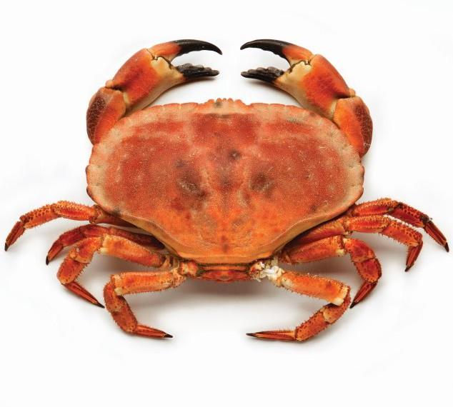 crabe tourteau surgelé-freshpack