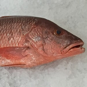 Frozen Mangrove Red Snapper, gutted, from Madagascar-Freshpack