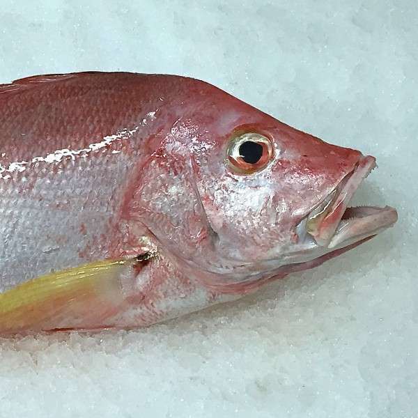 Frozen Humphead snapper from Madagascar-FRESHPACK