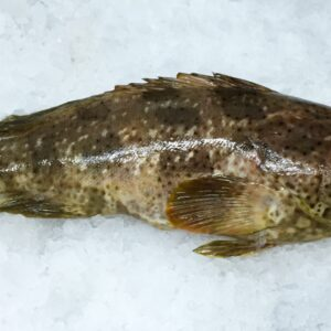 Frozen Malabar grouper from Madagascar | FRESHPACK